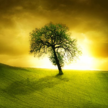 Beautiful Wallpapers on Lonely Beautiful Tree Ipad Wallpaper To Download