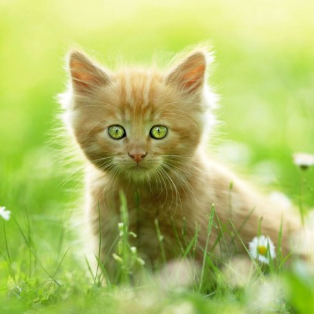 Nature Wallpaper on Sweet Cat Ipad Wallpaper To Download