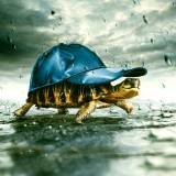 Turtle in the storm